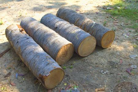 Coconut tree cut into logs.