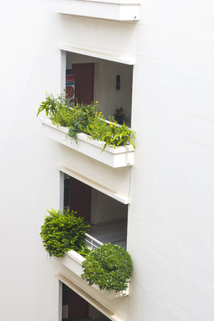 awnings windows: Green garden on white building balcony.