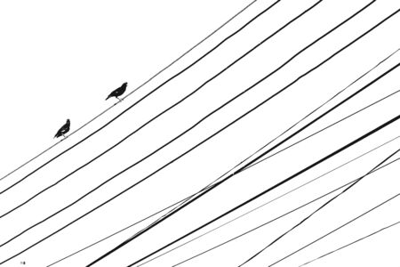 Silhouette of bird groups on electrical wires.