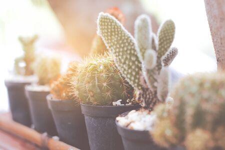 Beautiful garden with cactus trees. Stockfoto