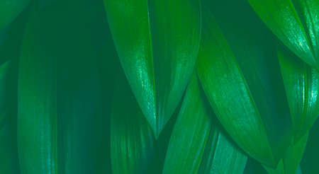 Green leaf pattern natural abstract background. 스톡 콘텐츠