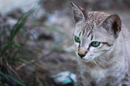 Portrait of a brown, white and green-eyed cat.