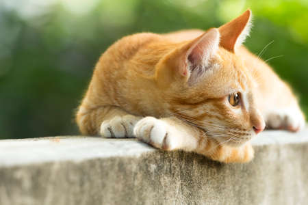 An orange kitten with eyes hanging out on a cement wall.