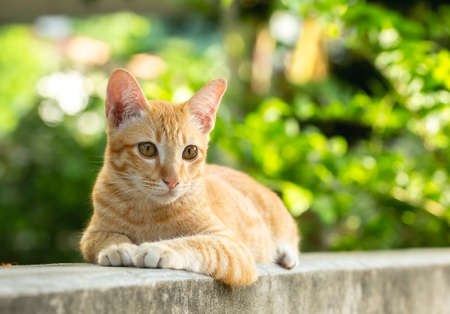 An orange kitten, mischievous and cute eyes on the cement wall.