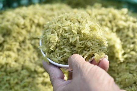 Light brown rice before harvest. Cultural food