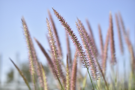 Beautifully simple grass flower style