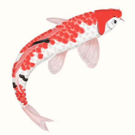 carp: Imitation watercolor rainbow carp koi. Hand drawn fish isolated. Vector illustration
