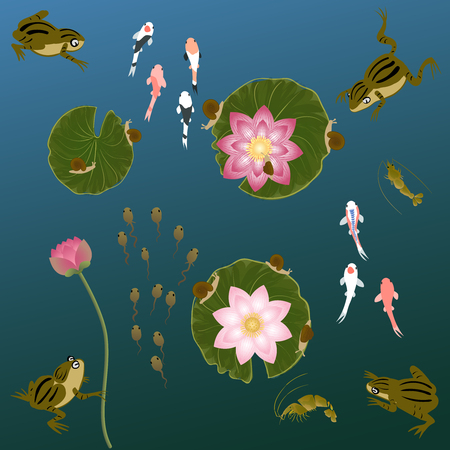 whitebait: pond with whitebait carp fishes water lilies frog and shrimp