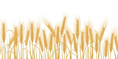 Espigas de trigo horizontal frontera ilustración vectorial sin patrón