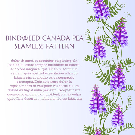 convolvulus: Vertical border seamless pattern wildflowers bindweed bird vetch canada pea for banners. Illustration