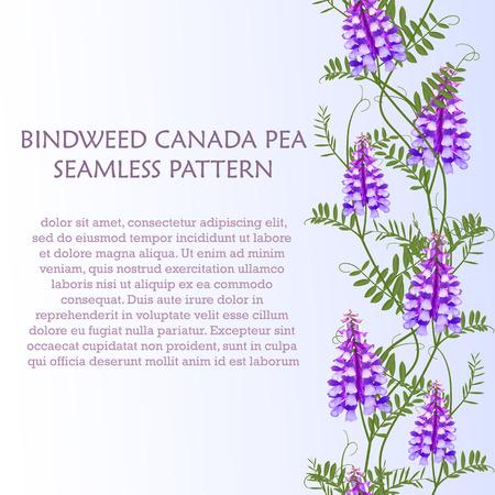 bindweed: Vertical border seamless pattern wildflowers bindweed bird vetch canada pea for banners. Illustration