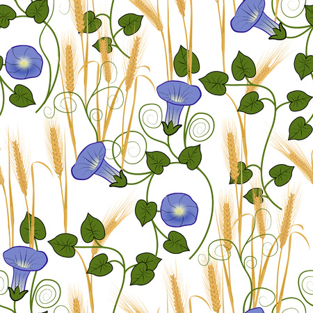 convolvulus: Bindweed and wheat on a white background seamless pattern. Vector illustration Illustration