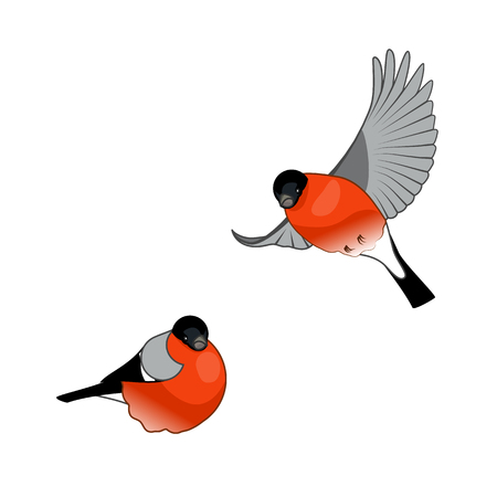 Isolated Vector Illustration with Bullfinch Birds on a white background