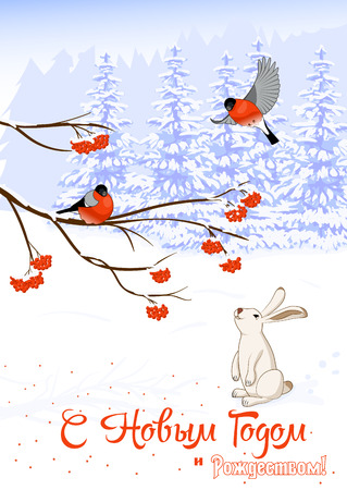 moroz: Vector Illustration Russian text Christmas and New Year Greeting. Card with Bullfinch Birds on a Rowan Tree Branch and White Hare collect berries in winter forest