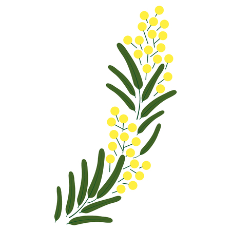Spring beautiful blossoming Mimosa branch. Vector illustrations