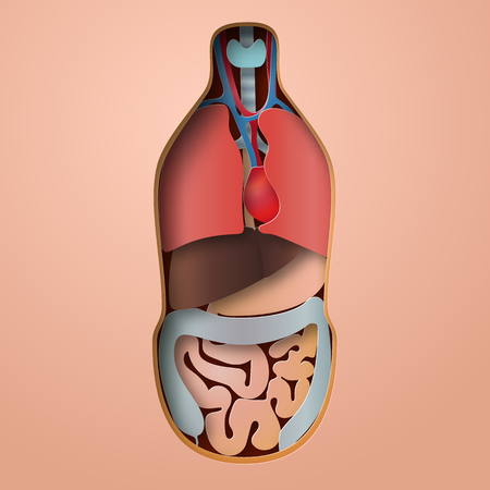 Human body anatomy, medical organs system paper craft style.