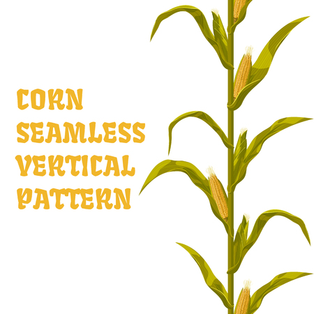 Corn maize vector seamless vertical pattern. Realistic botanical isolated illustration. Illustration