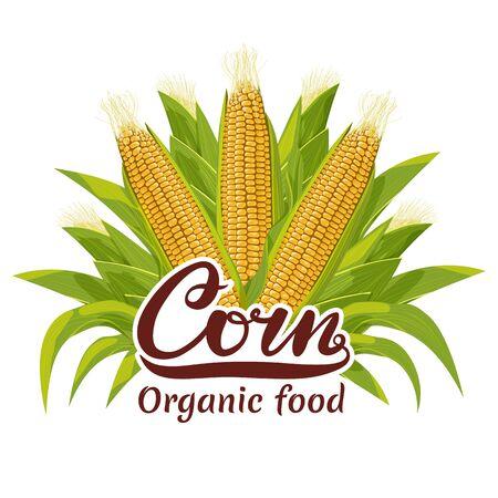 Corn cob organic food   vector illustration.