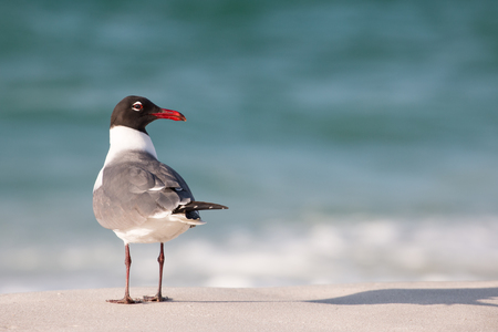 A seagull on a sandy beach by the shore.