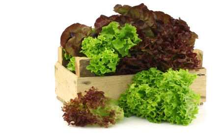 assorted lettuce in a wooden box on a white background  版權商用圖片