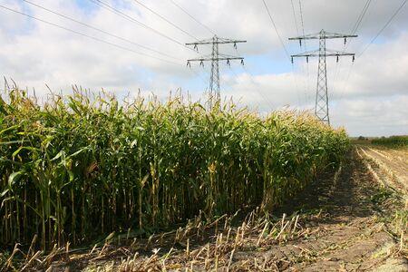 leeuwarden: partly harvested cornfield with power lines in Leeuwarden  Friesland