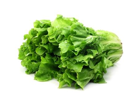 escarola: ensalada fresca endibia en un fondo blanco