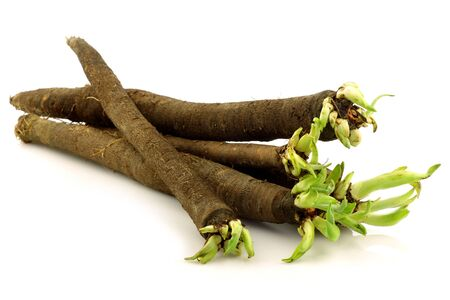 bunch of freshly harvested black salsify on a white background 版權商用圖片 - 15487528