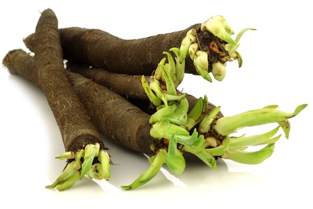 bunch of freshly harvested black salsify on a white background