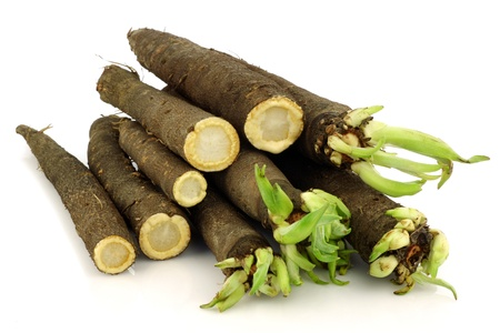 bunch of freshly harvested black salsify and some cut ones on a white background