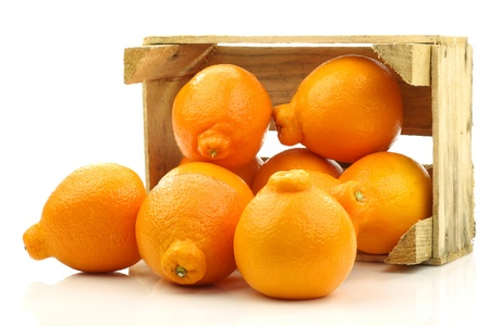 fresh and colorful Minneola tangelo fruit in a wooden crate on a white background  版權商用圖片