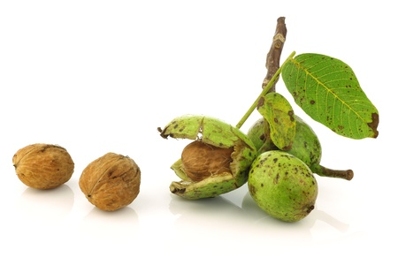 fresh walnuts  Juglans regia  with a shell opened on a white background