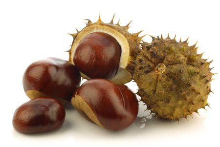 aesculus hippocastanum: freshly fallen chestnuts Aesculus hippocastanum  and some shells on a white background  Stock Photo