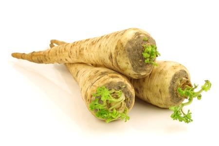 rooted: freshly harvested turnip rooted parsley  Petroselinum crispum var  tuberosum  on a white background