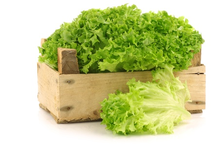 freshly harvested Lollo Bionda lettuce in a wooden crate on a white background