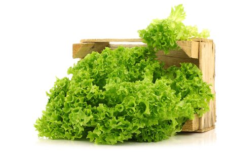 freshly harvested Lollo Bionda lettuce in a wooden crate on a white background 版權商用圖片 - 15109304