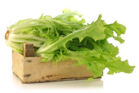 andijvie: vers geoogste andijvie in een houten kist op een witte achtergrond Stockfoto