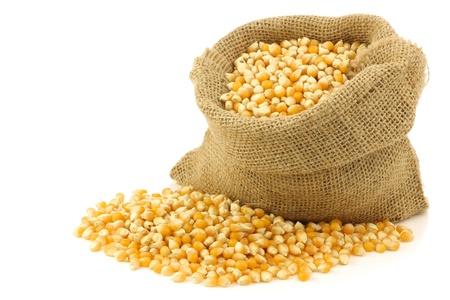 mazorca de maiz: grano de ma�z amarillo en una bolsa de arpillera en un fondo blanco Foto de archivo