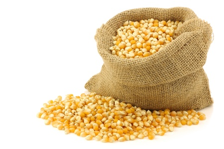 burlap sack: yellow corn grain in a burlap bag on a white background  Stock Photo