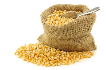 eating popcorn: yellow corn grain in a burlap bag with an aluminum scoop on a white background