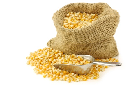 yellow corn grain in a burlap bag with an aluminum scoop on a white background
