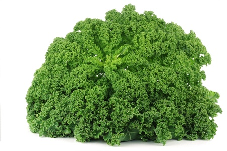 freshly harvested whole kale cabbage on a white background