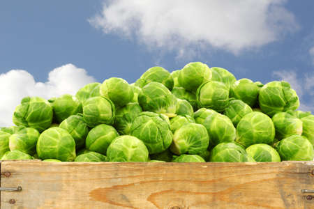 fresh brussel sprouts in a wooden crate against a blue sky with clouds photo