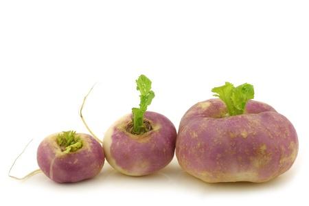rapa: freshly harvested spring turnips  Brassica rapa  on a white background