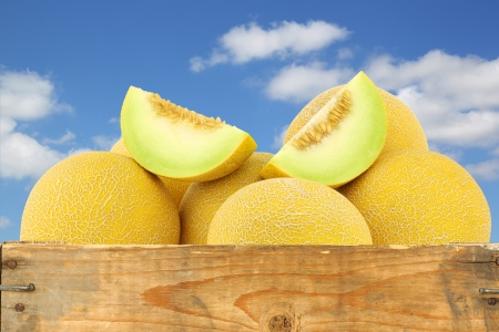 fresh galia melons and a cut one in a wooden crate against a blue sky with clouds photo