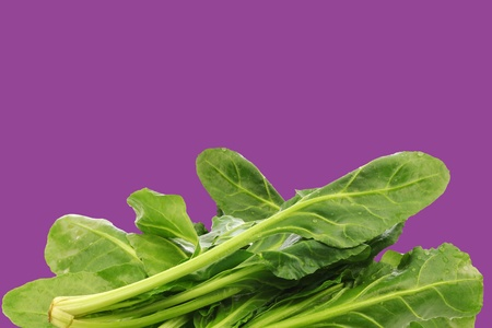 chinese spinach: fresh chinese spinach on a purple background with copy space Stock Photo