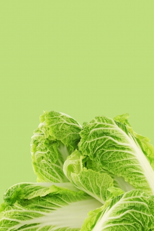 fresh chinese cabbage on a green background with copy space photo