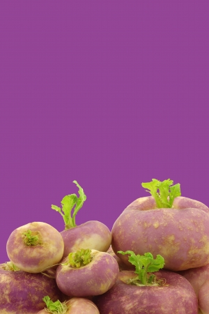 rapa: freshly harvested spring turnips  Brassica rapa  on a purple background