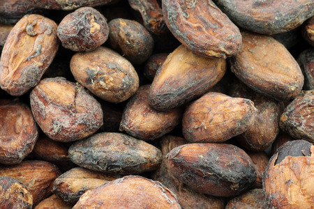 unpeeled: background of dried unpeeled cocoa beans Stock Photo