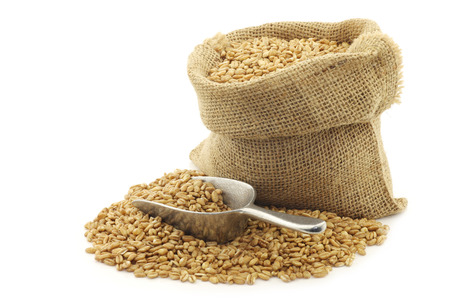 farro grain in a burlap bag with an aluminum scoop on a white background