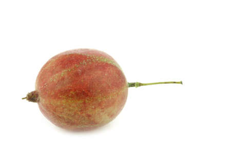 gooseberry: gooseberry Ribes uva-crispa on a white background